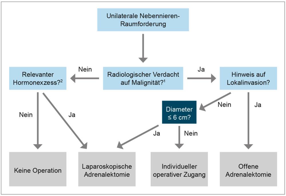 Fein Nebenniere Diagramm Zeitgenössisch - Anatomie Ideen - finotti.info